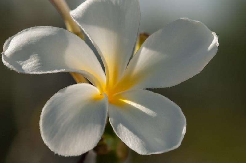 Sea Watch Flower 3