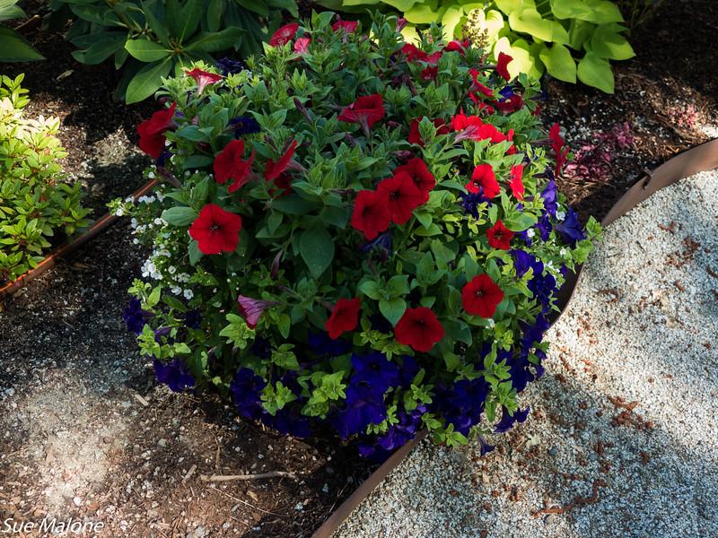 Early July Gardens-9.jpg