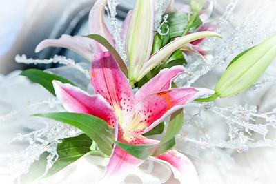 Stephen  Tu Ahn Wedding
