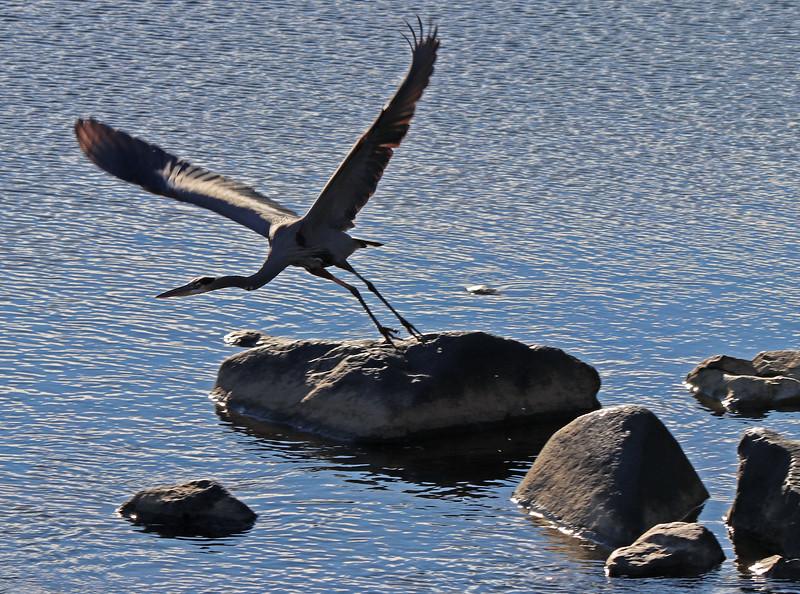 Heron ascending 2