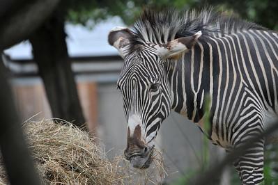 National Zoo (5/17/2011)