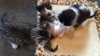 Katie & David's barn cats and kittens