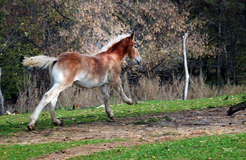 04 Foal running .jpg