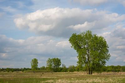 Pratt's Wayne Woods Forest Preserve