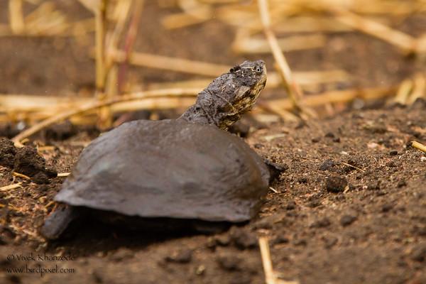 Unidentified Tortoises