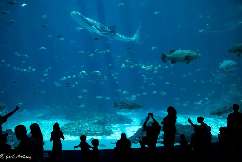 20070531-whale_shark_0048.jpg