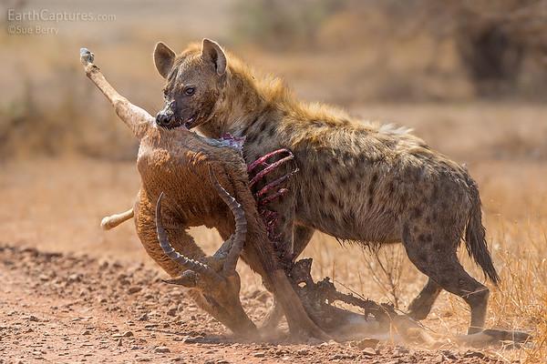 Kruger 2019