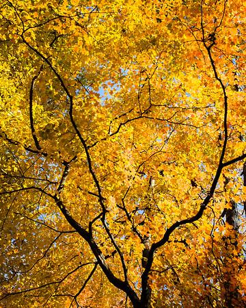 Fall @ Mounds Fall