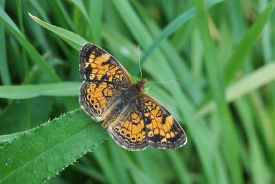 Butterflies and caterpillars.Not a lowly worm any more