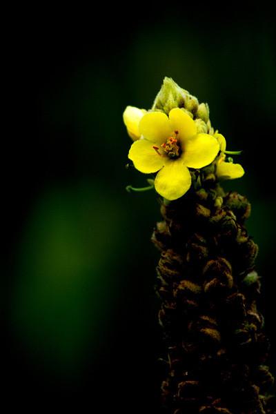 015-flower-wdsm-19aug13-0814