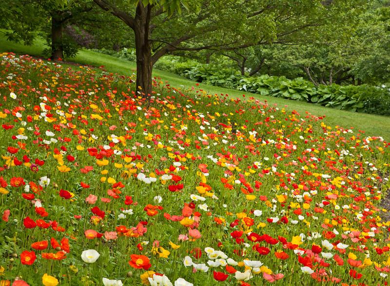 Botanic_Garden13-0581.jpg