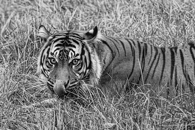 A B&W Nashville Zoo