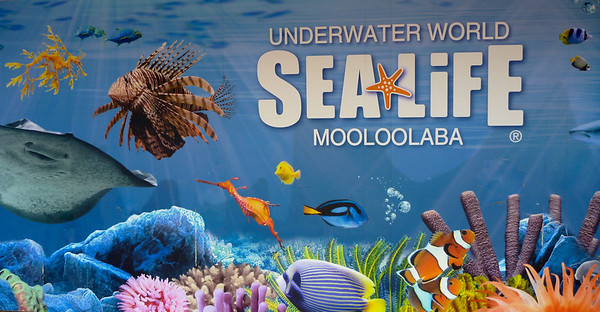 Part 7 ~ Mooloolaba Sea Life Aquarium