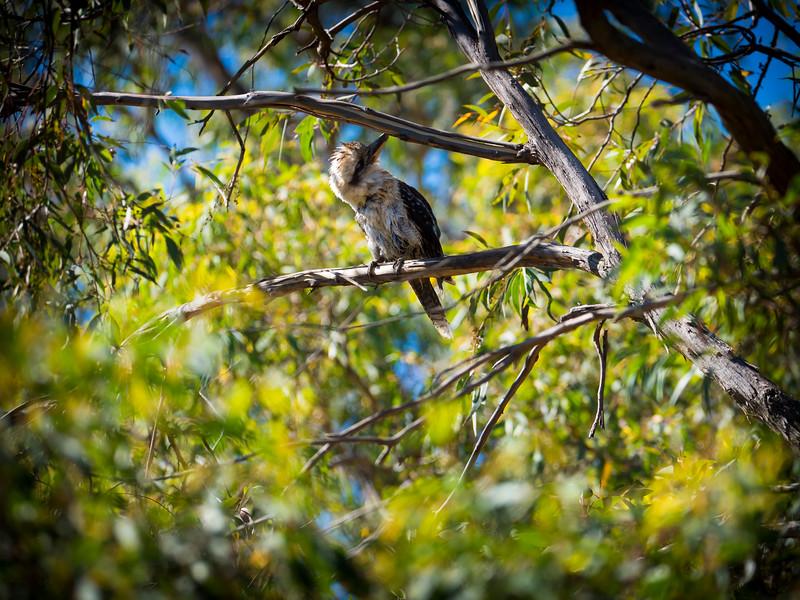 010419   birds  _6.JPG