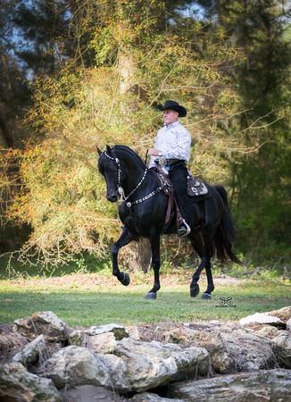 ALB Morgans - Stilwell Thunder under saddle
