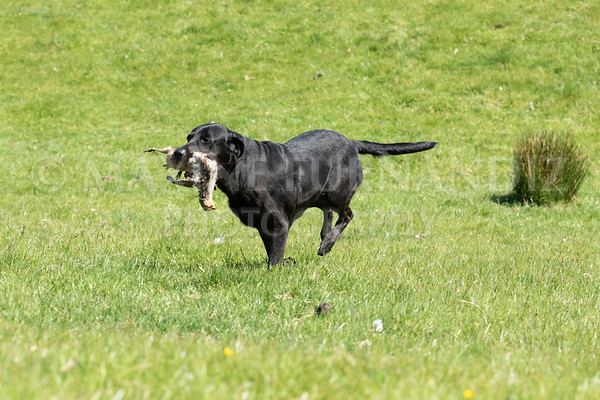 GUNDOG TRAINING DAY MAY 2019 - North Yorkshire