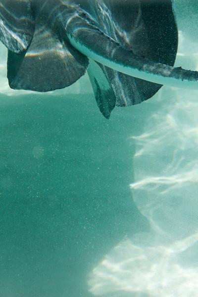 cayman--6.jpg