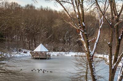 Meadowlark in January