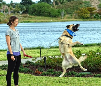 Boynton Village Dog Park