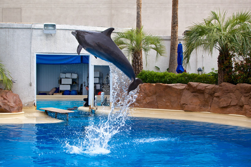 Dolphin leaps out of the water at the Secret Garden at the Mirage Hotel and Casino.