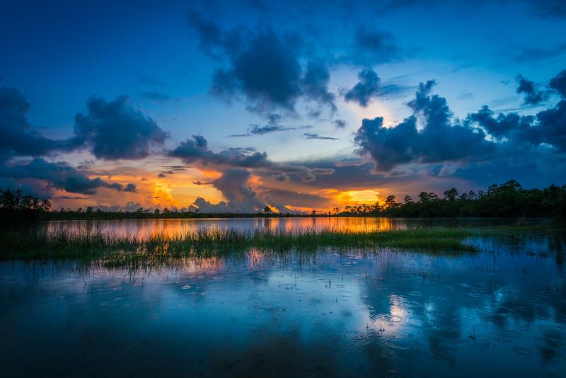 Everglades (11 of 37).jpg