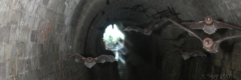 Burfords Batcave, Brisbane. Photo by Trent.
