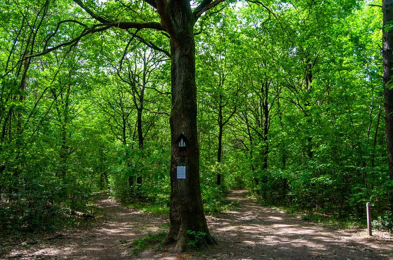 Nationaal Park Hoge Kempen - Duinengordel, omgeving Donderslag 15.jpg