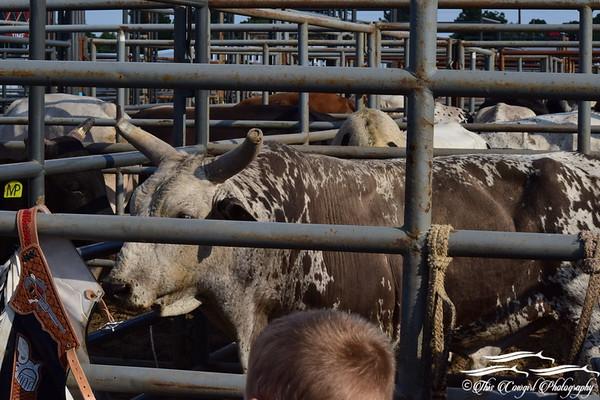 2017 Merced Fair Bull Riding