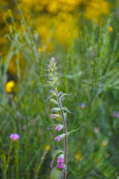 Vouzela-PR2 - Um Olhar sobre o Mundo Rural - 17-05-2008 - 7402.jpg