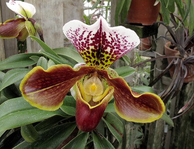 Hothouse plants and flowers - an olio of older shots