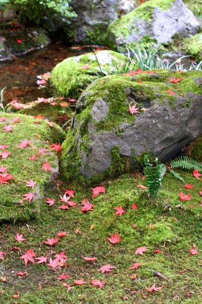 Portland Japanese Garden  11-11-11  3512.jpg