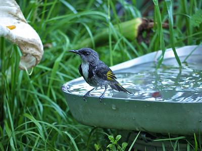 Birdlife 2