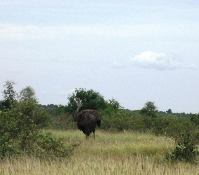 girl ostrich.jpg