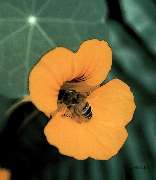 dark bee 7-12-2009.jpg