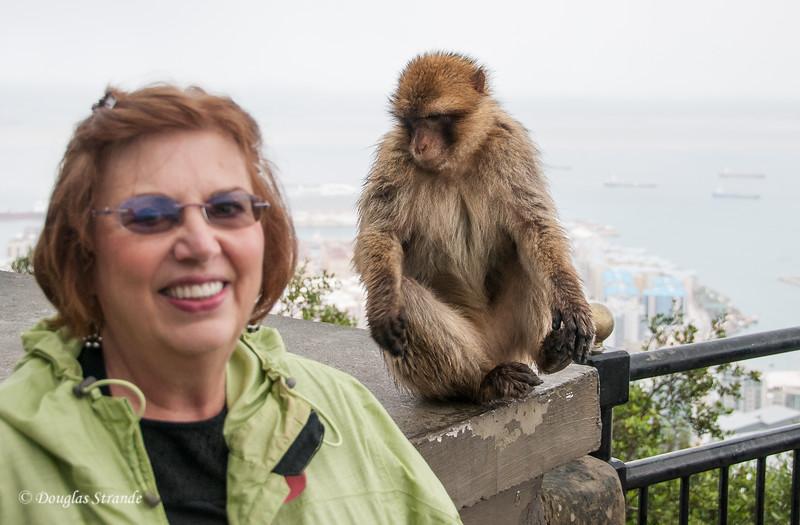 Gibraltar - Barbary Ape likes Louise
