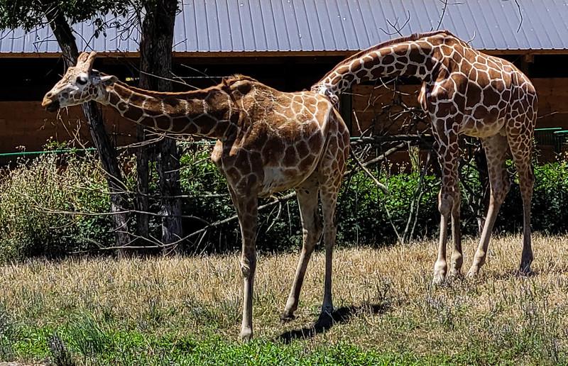 07-05-2021 Winston Wildlife Safari-36.jpg