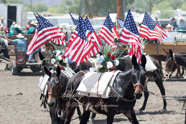 Bishop Mule Days Celebration 2015