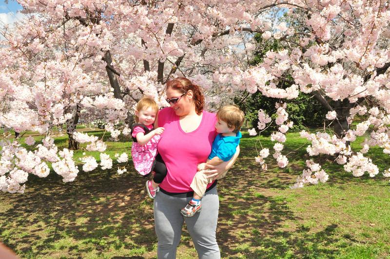 Cherry Blossoms 2014 082.jpg