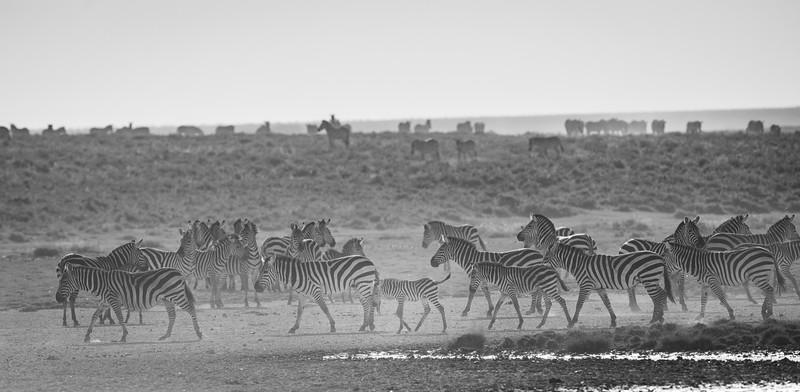 Tanzania_Feb_2018-360.jpg