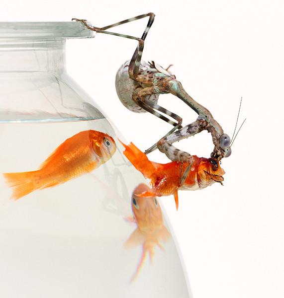 Mantis Goes Fishing2