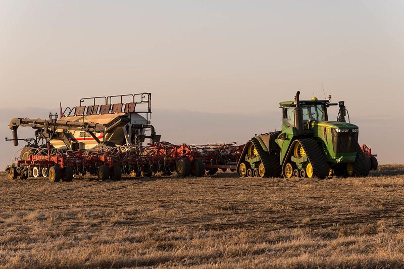 barley 12.jpg