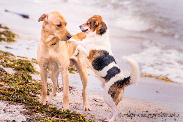 20141007pet_photography_Tampa_Stephaniellenphotography.com-_MG_0193-Edit.jpg