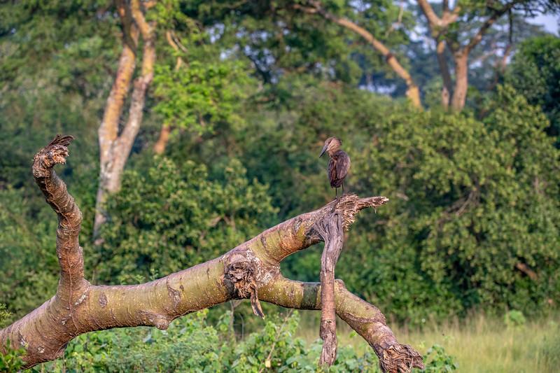 Uganda_T_QE-234.jpg