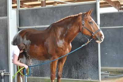 Rachel Halabi_Horses