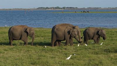 National Parks Yala & Kaudulla