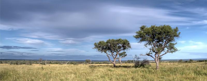 Mark-Fletcher-South African Plains.jpg