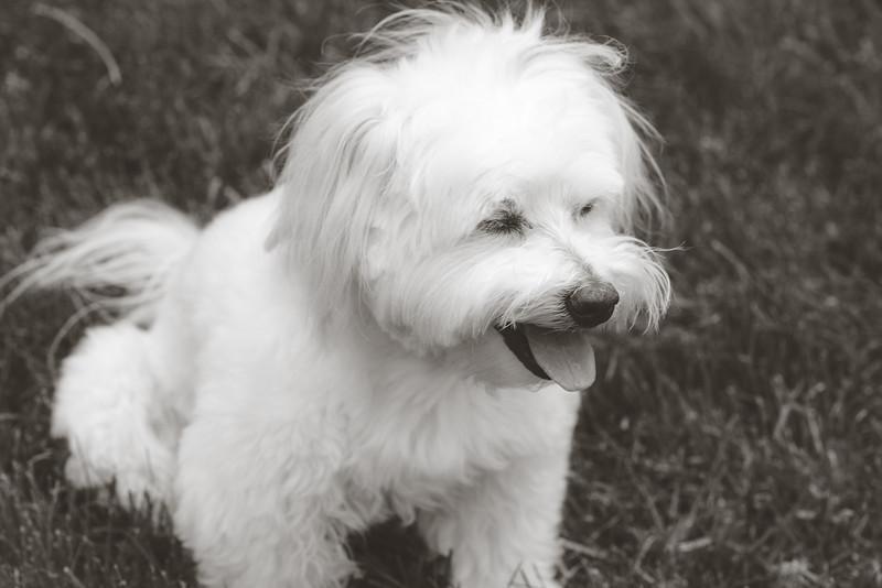 opal mike dogs (1 of 1)-87.jpg
