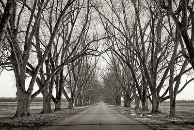 Pecan Alley After The Fall