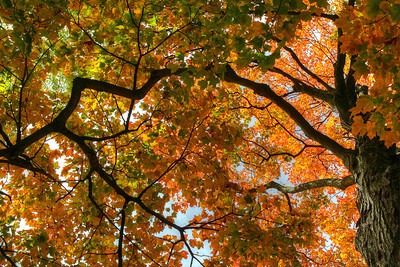 Fall_2013