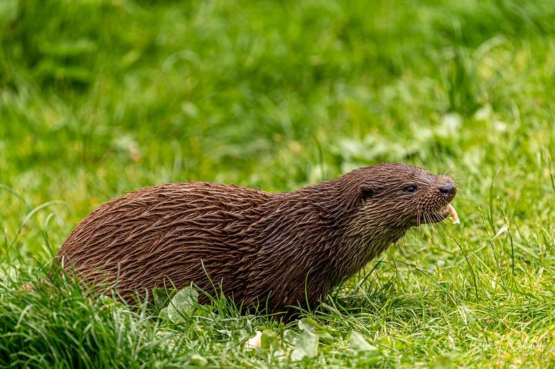 British Wildlife Centre_Z6-7399.jpg